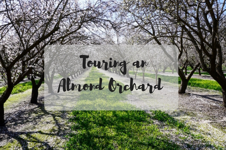 I Toured an Almond Orchard with Almond Breeze!